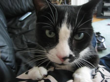 kitty_021