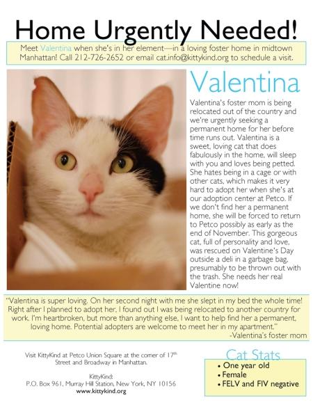 Urgent_Home Needed_Valentina_e