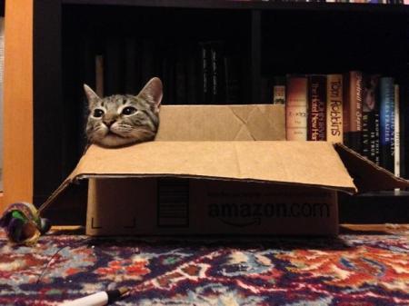 Liam in Box